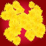 Yellow flowers on red background Royalty Free Stock Photo