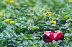 Yellow flowers in red heart shape on green nature background Stock Photos