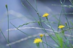Yellow flowers on riverside Stock Image