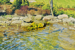 Yellow flowers in the rocks above the river Royalty Free Stock Image