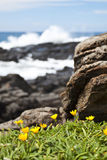 Yellow flowers on the rocks by the sea Stock Photography