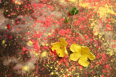 Yellow flowers on a rough cement floor Stock Images