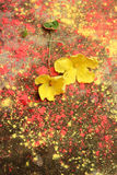 Yellow flowers on a rough cement floor Stock Image