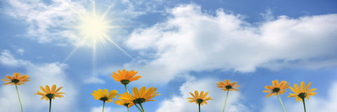 Yellow flowers  Rudbeckia against blue sky with clouds, banner Stock Photos
