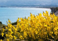 Yellow flowers at seaside Royalty Free Stock Images