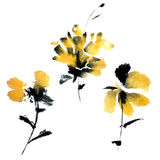 Yellow flowers set Royalty Free Stock Photography