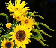 Yellow flowers shine in the night Stock Image