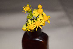 Yellow flowers in small brown bottle Stock Image