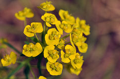Yellow flowers. Small bunch of yellow flowers on a brown background fuzzy little green twigs Royalty Free Stock Photo