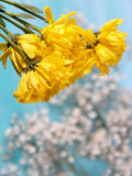 Yellow flowers. Small Flower Concept and Decoration stock image