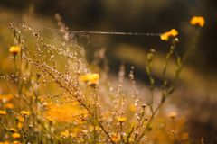 Yellow flowers with spider web stock photography