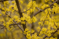 Yellow flowers  in spring. Royalty Free Stock Photos