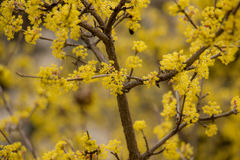 Yellow flowers  in spring. Stock Photos