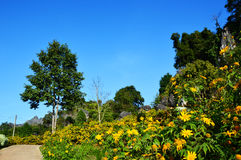Yellow Flowers in stone garden Royalty Free Stock Photography
