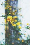 Yellow flowers in summer garden Royalty Free Stock Images