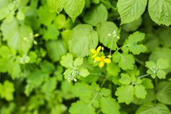Yellow flowers in summer meadow background Stock Photo