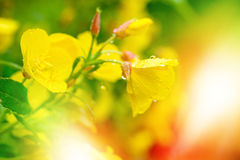 Yellow flowers on a sunny blurred background Stock Images