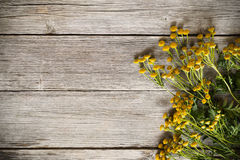 Yellow flowers of tansy on wooden background. Yellow flowers of tansy on the wooden background royalty free stock photography