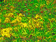 Yellow flowers. Tree with yellow flowers and green leaves Royalty Free Stock Photos