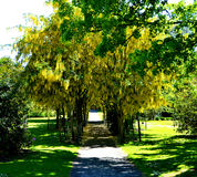 Yellow flowers in tree tunnel. Yellow flowers in community garden royalty free stock photography