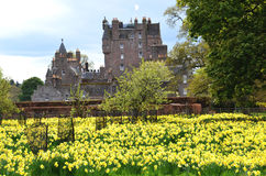Yellow flowers in tree tunnel. Yellow flowers in community garden with castle in background stock image