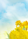 Yellow flowers under blue sky Royalty Free Stock Photo