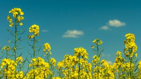 Yellow Flowers Under Partly Cloudy Skies during Daytime Stock Images