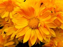 Yellow flowers are very bright stock photo