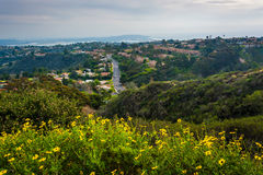 Yellow flowers and view of houses in the hills of La Jolla  Royalty Free Stock Images