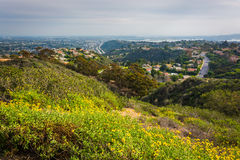 Yellow flowers and view of houses in the hills of La Jolla  Stock Images