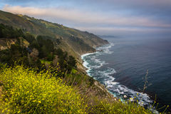 Yellow flowers and view of the Pacific Coast, in Big Sur  Stock Photos