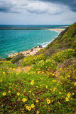 Yellow flowers and view of the Pacific Ocean from Inspiration Po Royalty Free Stock Images