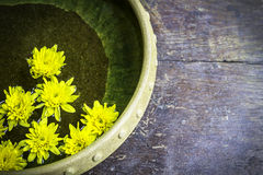 Yellow flowers on  water in bowl Royalty Free Stock Photo