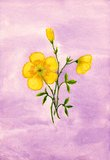Yellow flowers watercolor Royalty Free Stock Photos