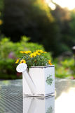 Yellow flowers in watering can Stock Photography