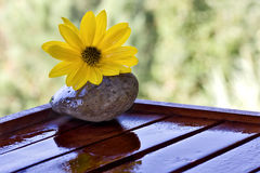 Yellow flowers, wet stone and wood Stock Photo