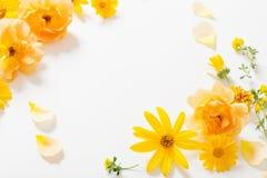 Yellow  flowers on white background stock photos