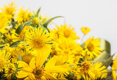 Yellow flowers on white background. Yellow flowers background with summer vibe feeling Royalty Free Stock Photo
