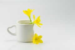 Yellow flowers in white cup on white background Royalty Free Stock Image