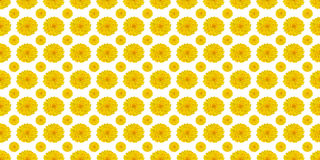 Yellow flowers on white royalty free stock images