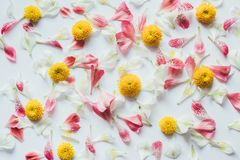 Pattern With Colorful Flowers On White Background Royalty Free Stock Photos