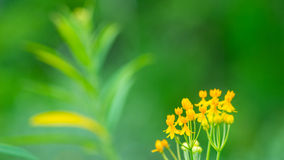 Yellow Flowers wih Defocused Green Background Stock Photos