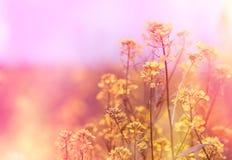 Yellow flowers (wild flower) Royalty Free Stock Photo