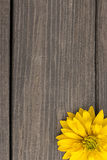 Yellow flowers on wooden background. stock photo