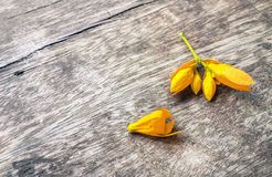 Yellow flowers on a wooden background Royalty Free Stock Images