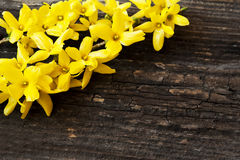 Yellow Flowers on Wooden Background Royalty Free Stock Photo