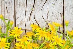 Yellow flowers on wooden background Royalty Free Stock Image