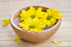 Yellow flowers in wooden bow Stock Photo