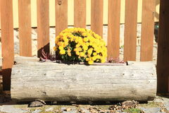 Yellow flowers in wooden case Royalty Free Stock Image