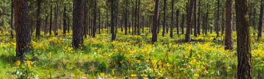 Yellow flowers in woods Stock Photos